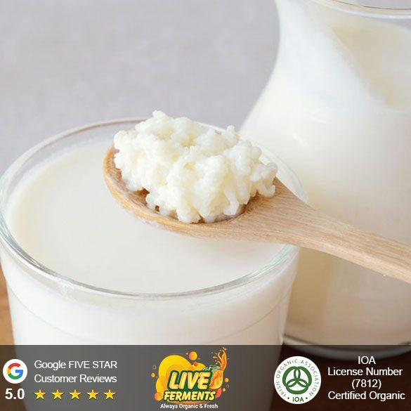 milk-kefir-grains